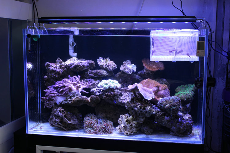 H40 LED Sea Water Coral Aquarium Light